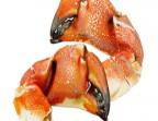 Photo Pinces de crabe - LE CARRE SAINT MICHEL